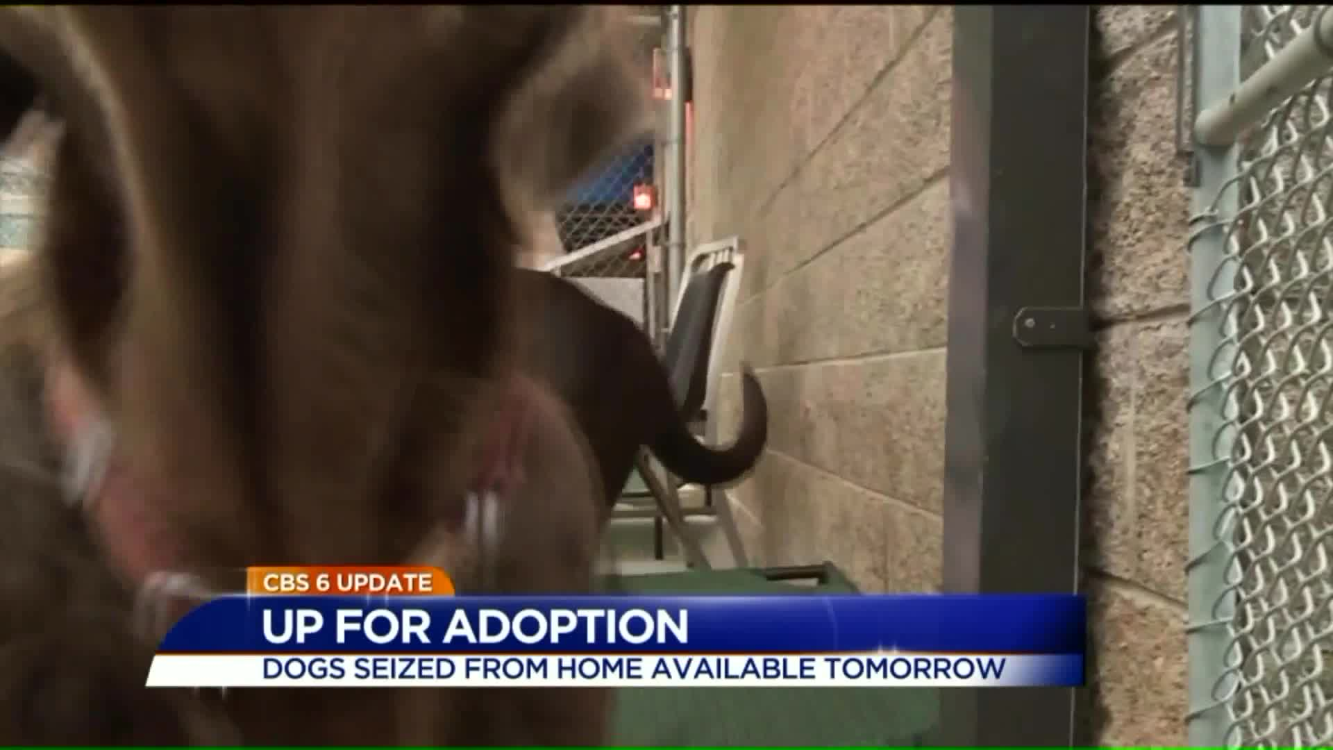 66 Dogs Rescued From Virginia Home Up For Adoption