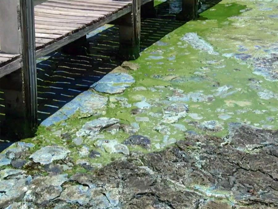 Stench from algae blooms in Martin County forcing people inside their homes