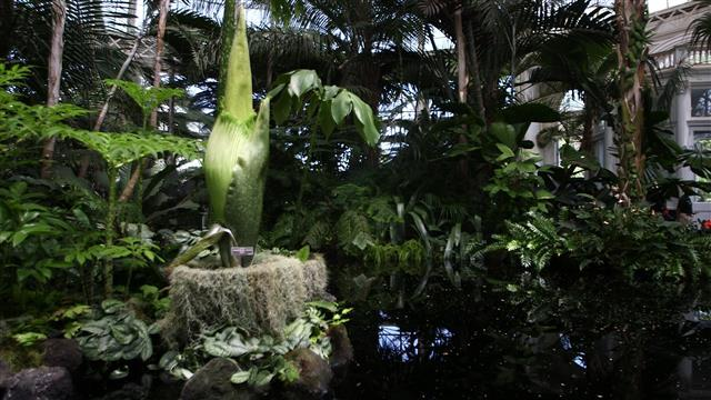 Corpse Flower Causes Big Stink in New York City