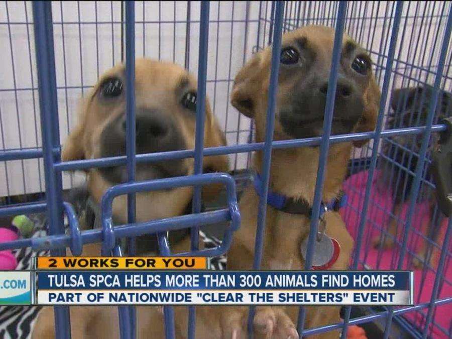 Tulsa Clear the Shelters 2016 a major success