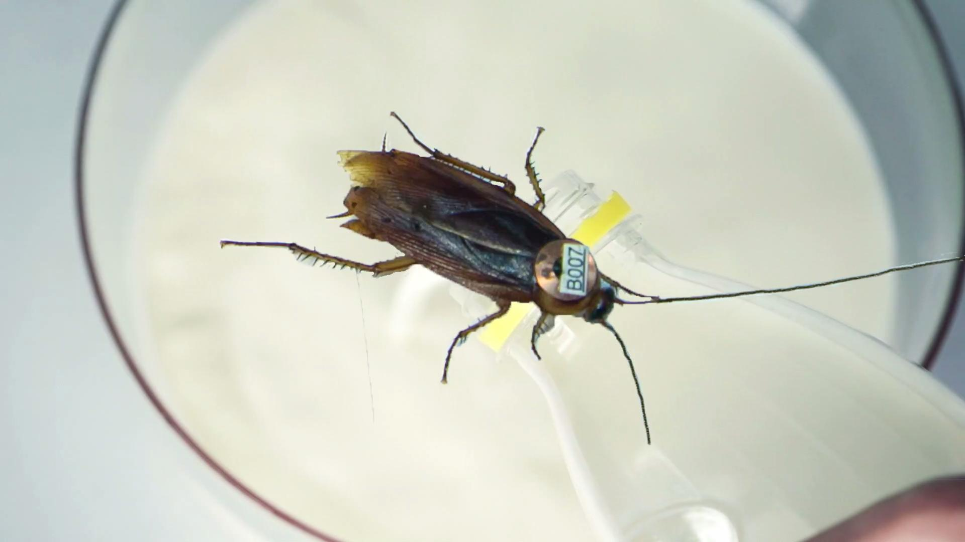 Cockroach Milk Might Solve World Hunger