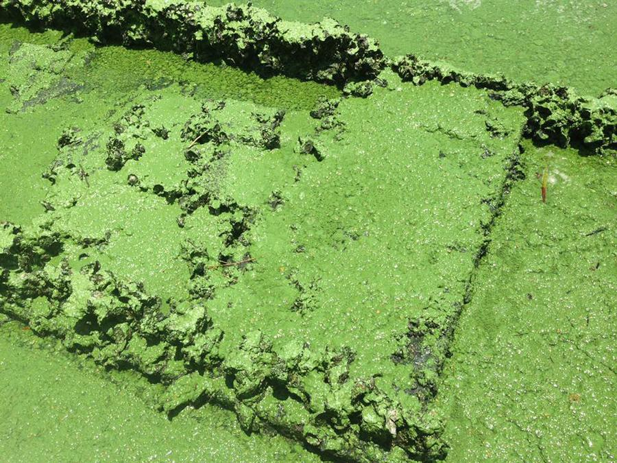 Report says algae toxins contaminating air in Martin County