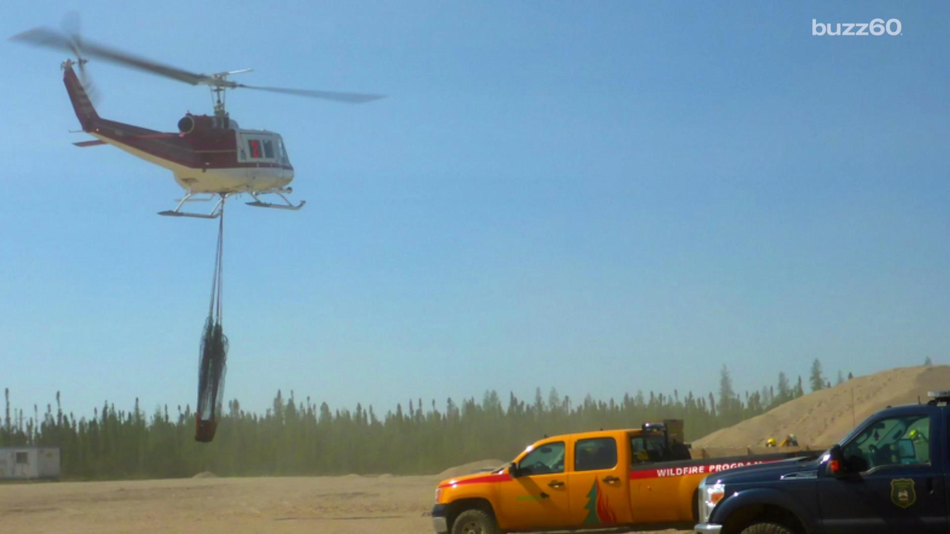 Stubborn Bear Had to Be Airlifted Back to Forest