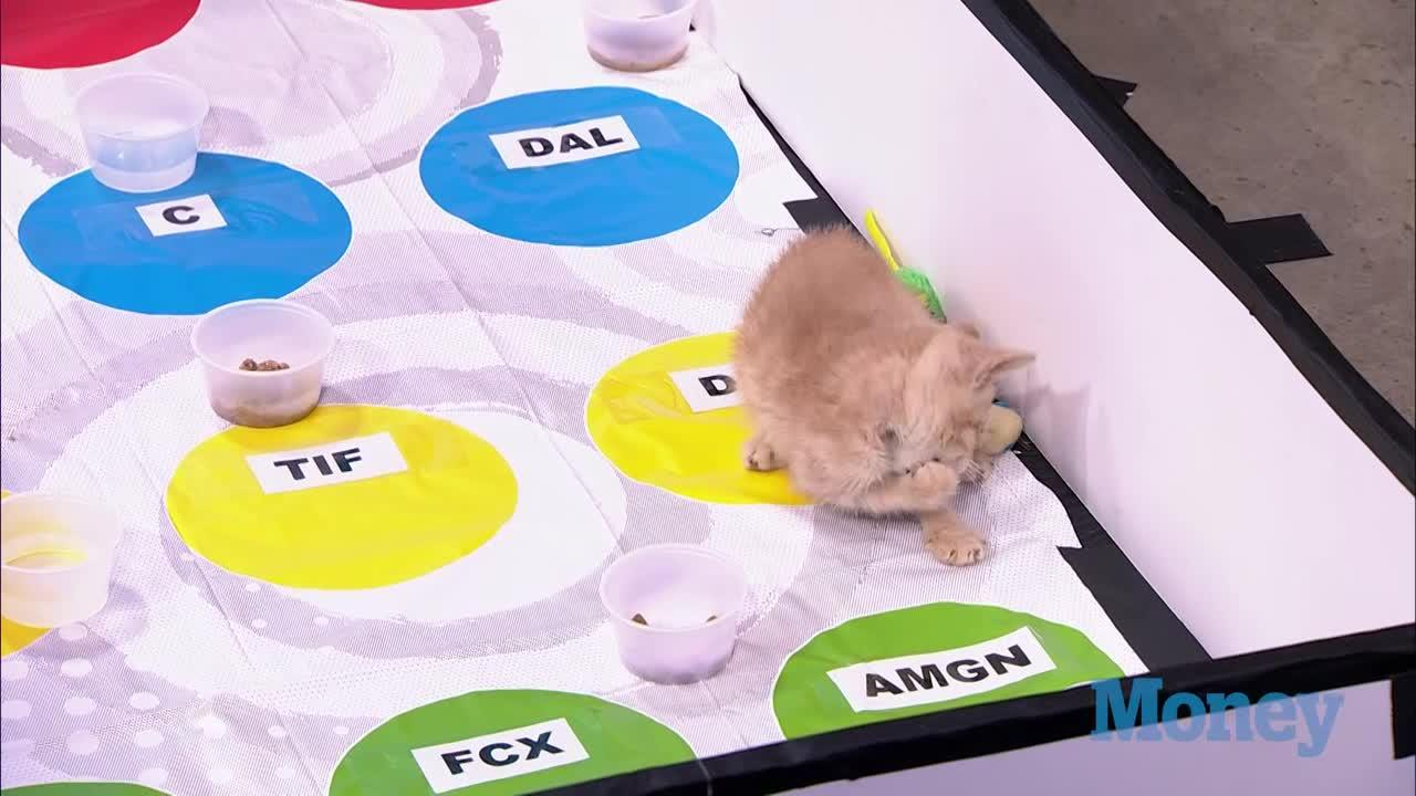 Kittens Show How to Trade Stocks