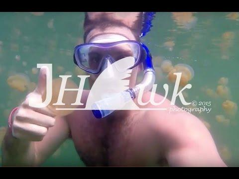Man Happily Snorkels Alongside Hundreds of Jellyfish
