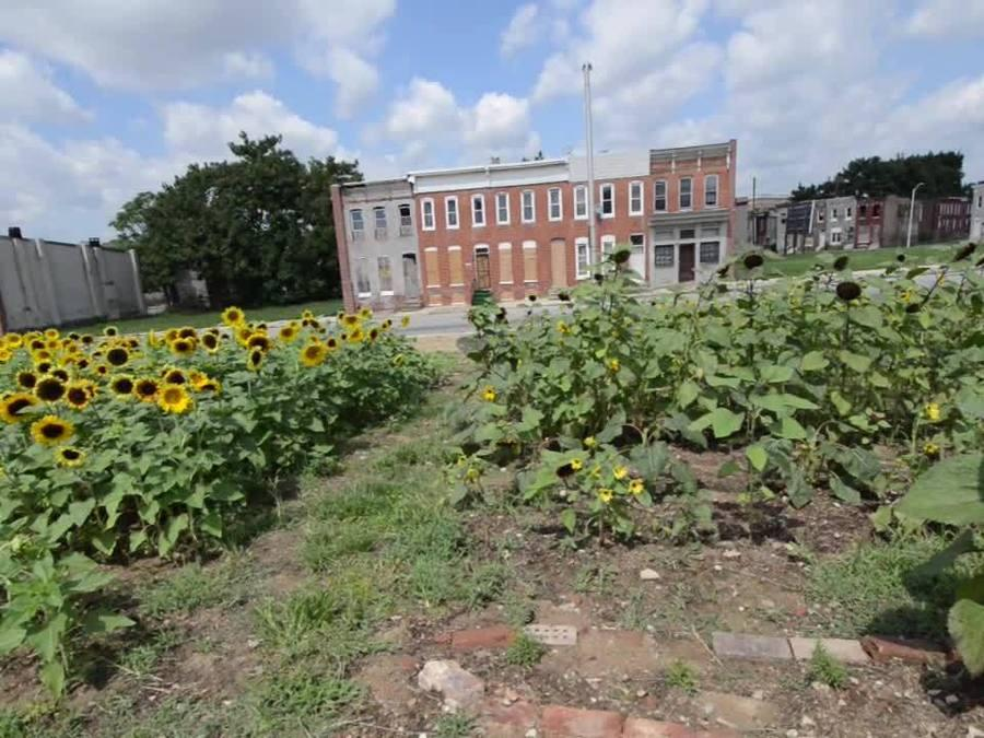 Tha Flower Factory adds beauty to a once vacant lot in east Baltimore