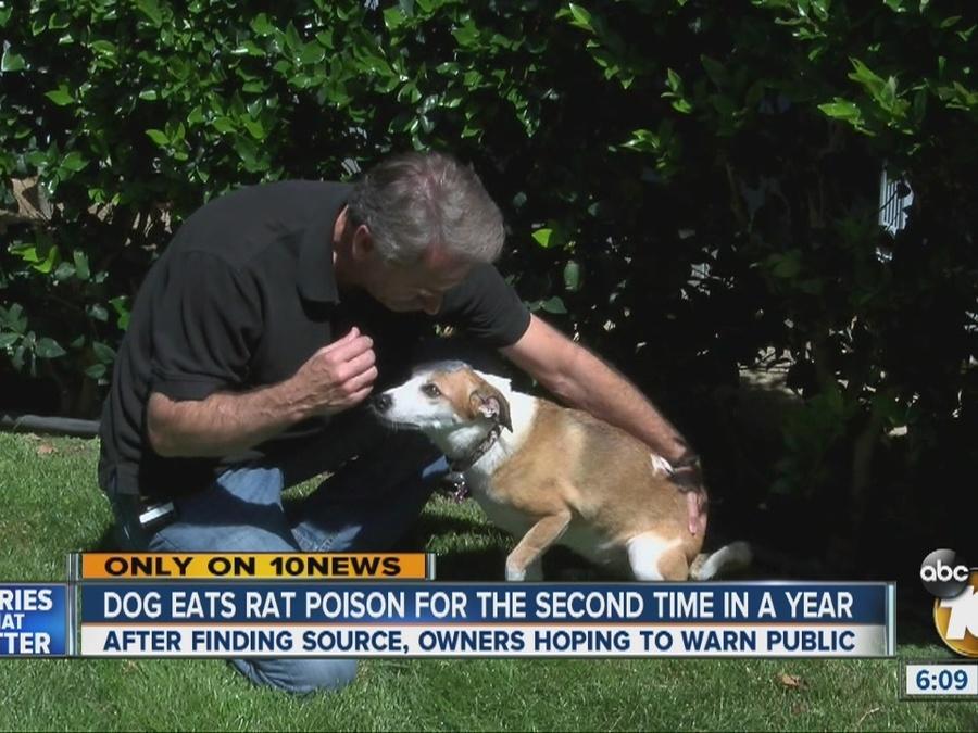 Dog Eats Rat Poison