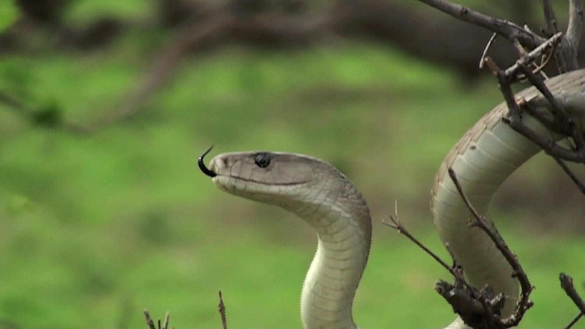 5 Tips To Attract Snakes To Your Yard