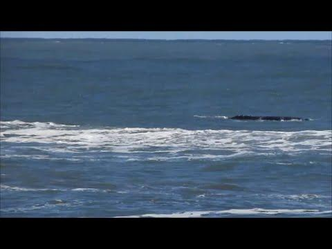 Whales Surface Off Brazilian Coast After Storm Passes Through