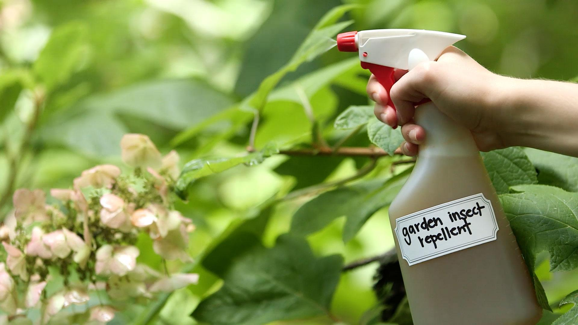 DIY Garden Insect Repellent