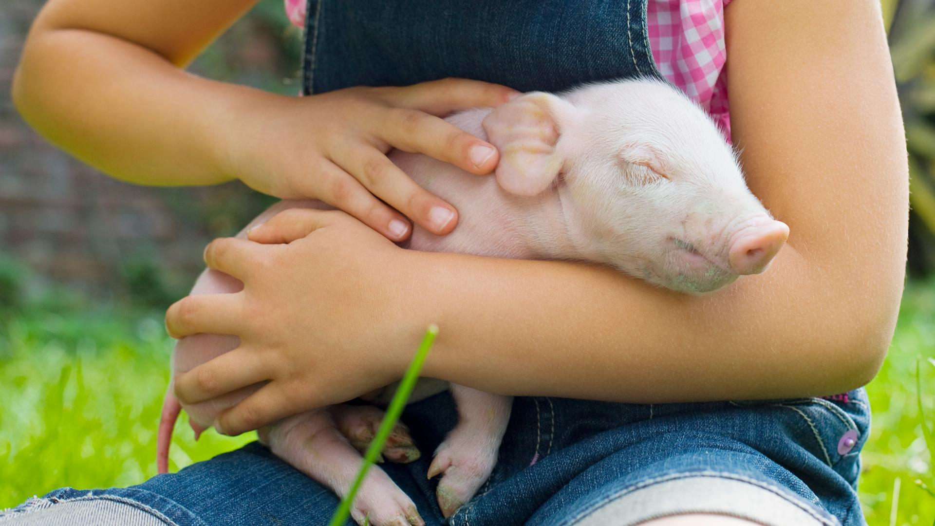 Massachusetts Just Passed a Groundbreaking Law to Protect Farm Animals