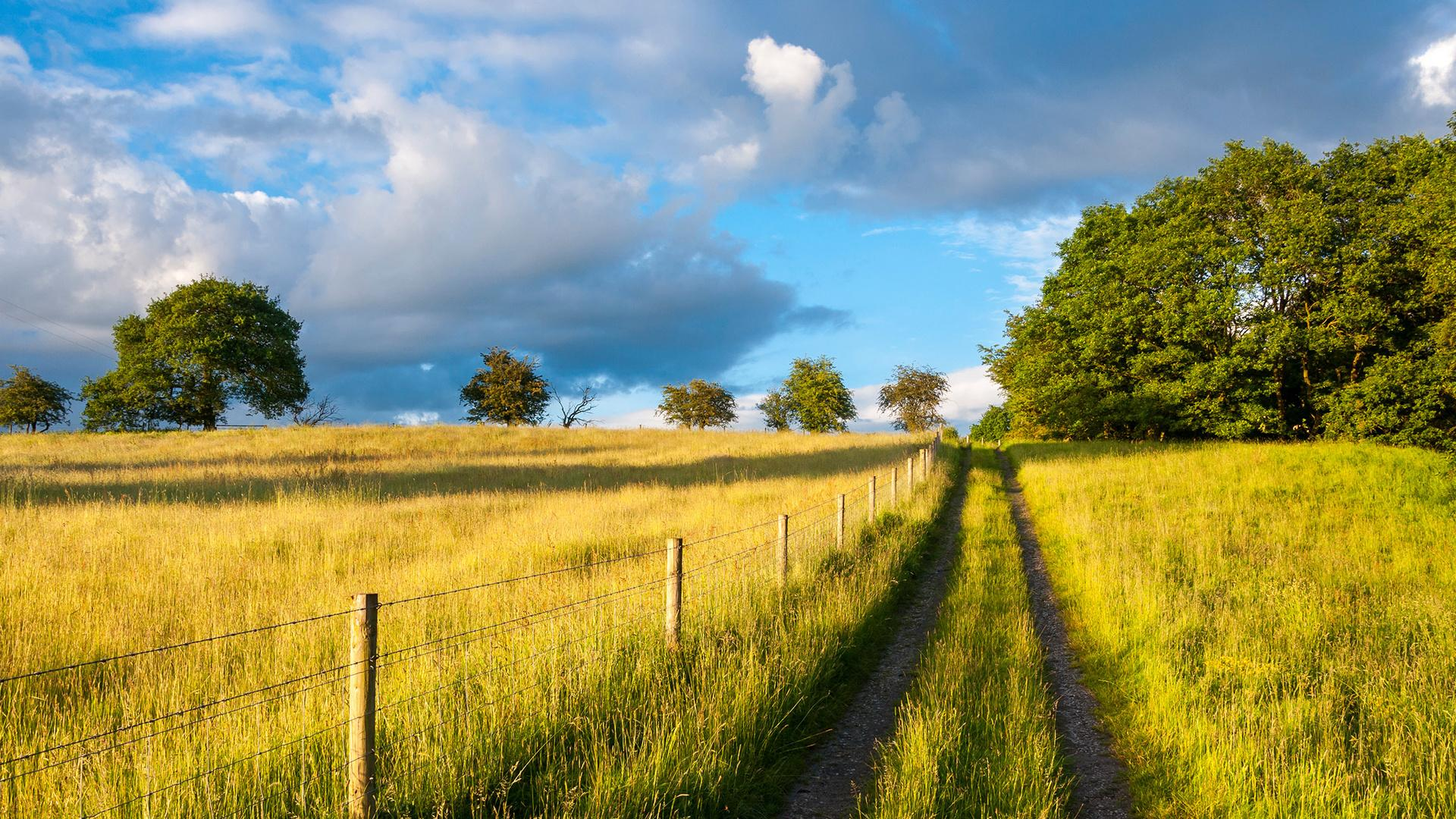 Living in the Country Puts You at a Lower Risk for Developing Dementia