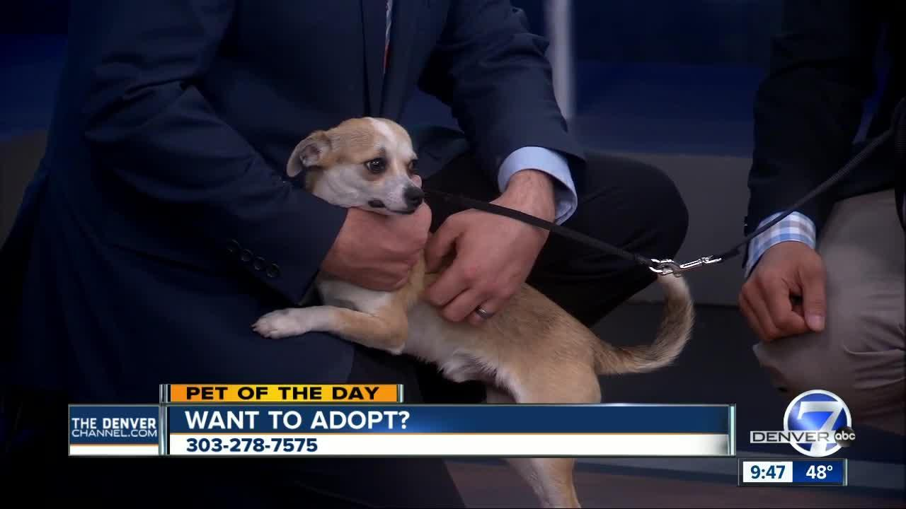 Pet of the Day for Feb. 19 - Tiny Tim
