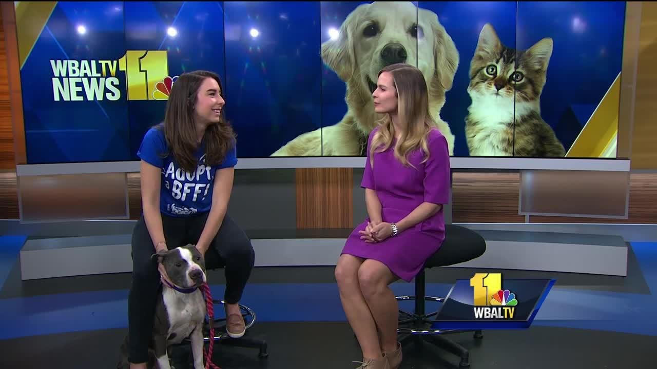 Adopt-a-Pet: Training adopted pets