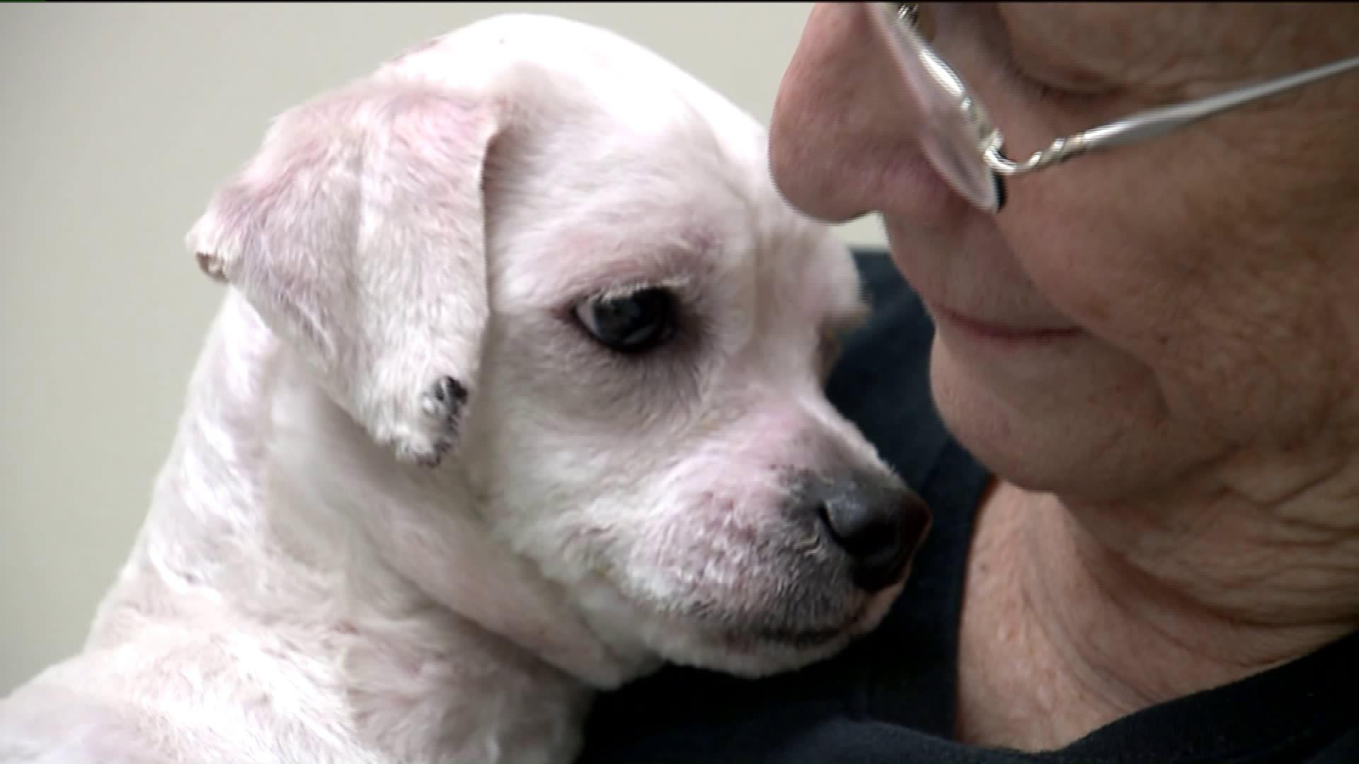 Dogs Rescued from South Korea Brought to Wisconsin