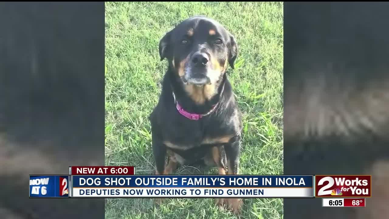 Family's dog shot and killed outside home in Inola