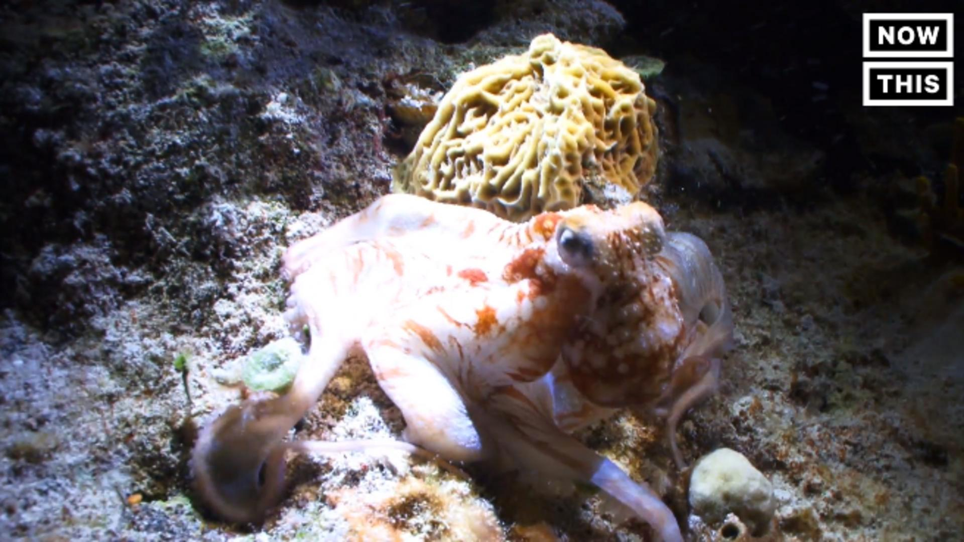 Octopi, Squids, And Cuttlefish Are Taking Over the Ocean