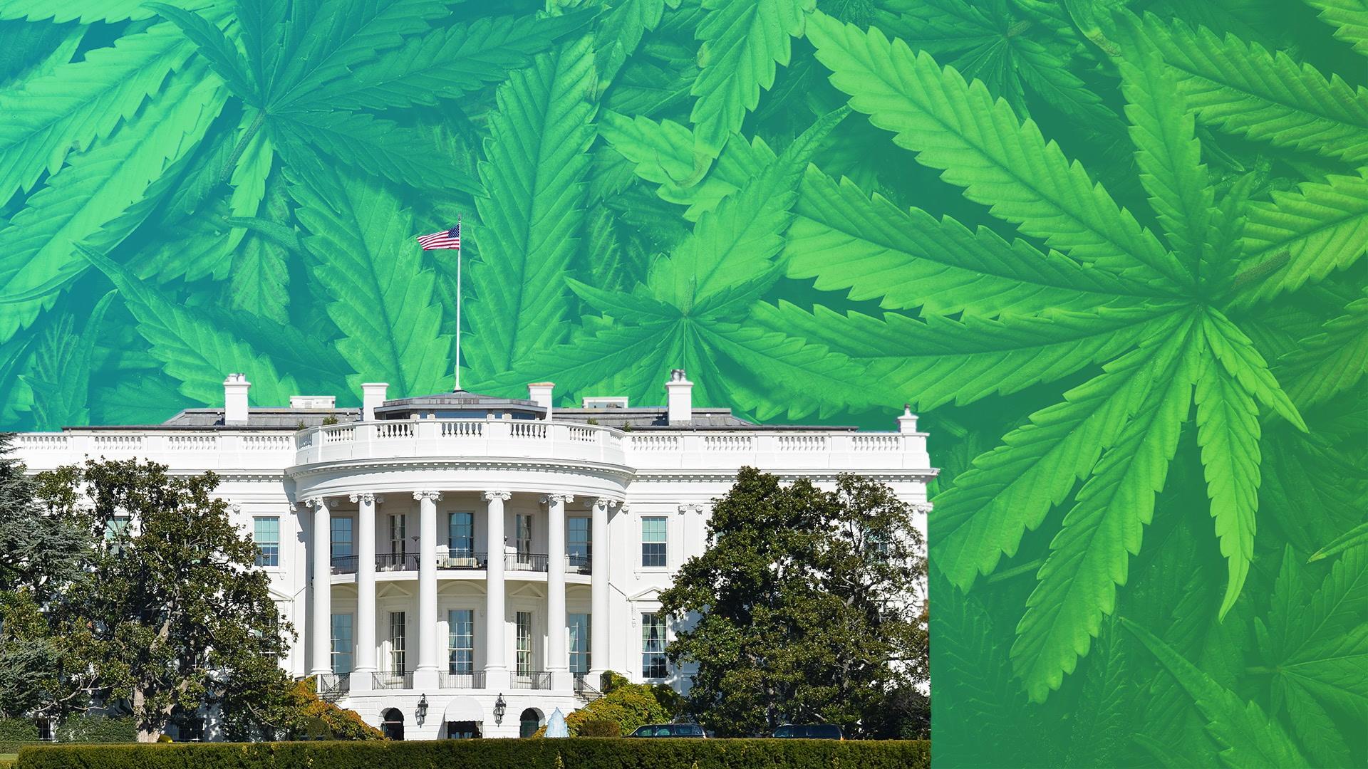 White House Cracks Down on Pot