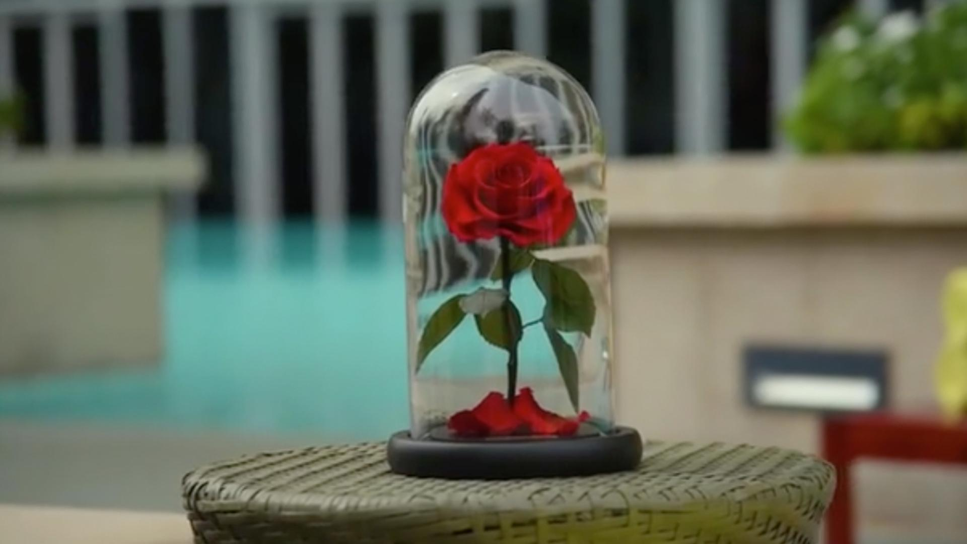 These Real Enchanted Roses Will Last 3 Magical Years