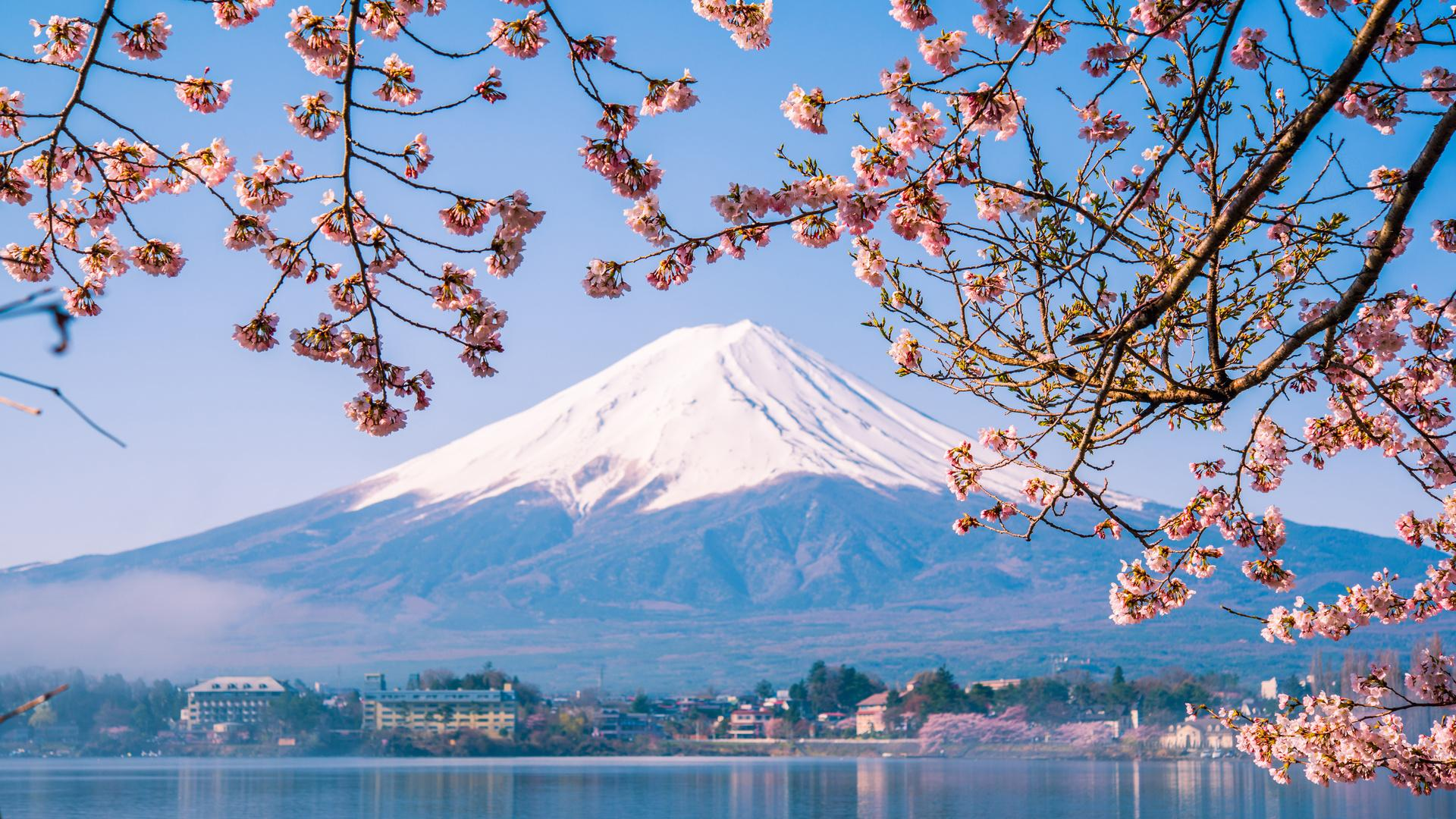 Feast Your Eyes on Japan's Gorgeous Cherry Blossoms