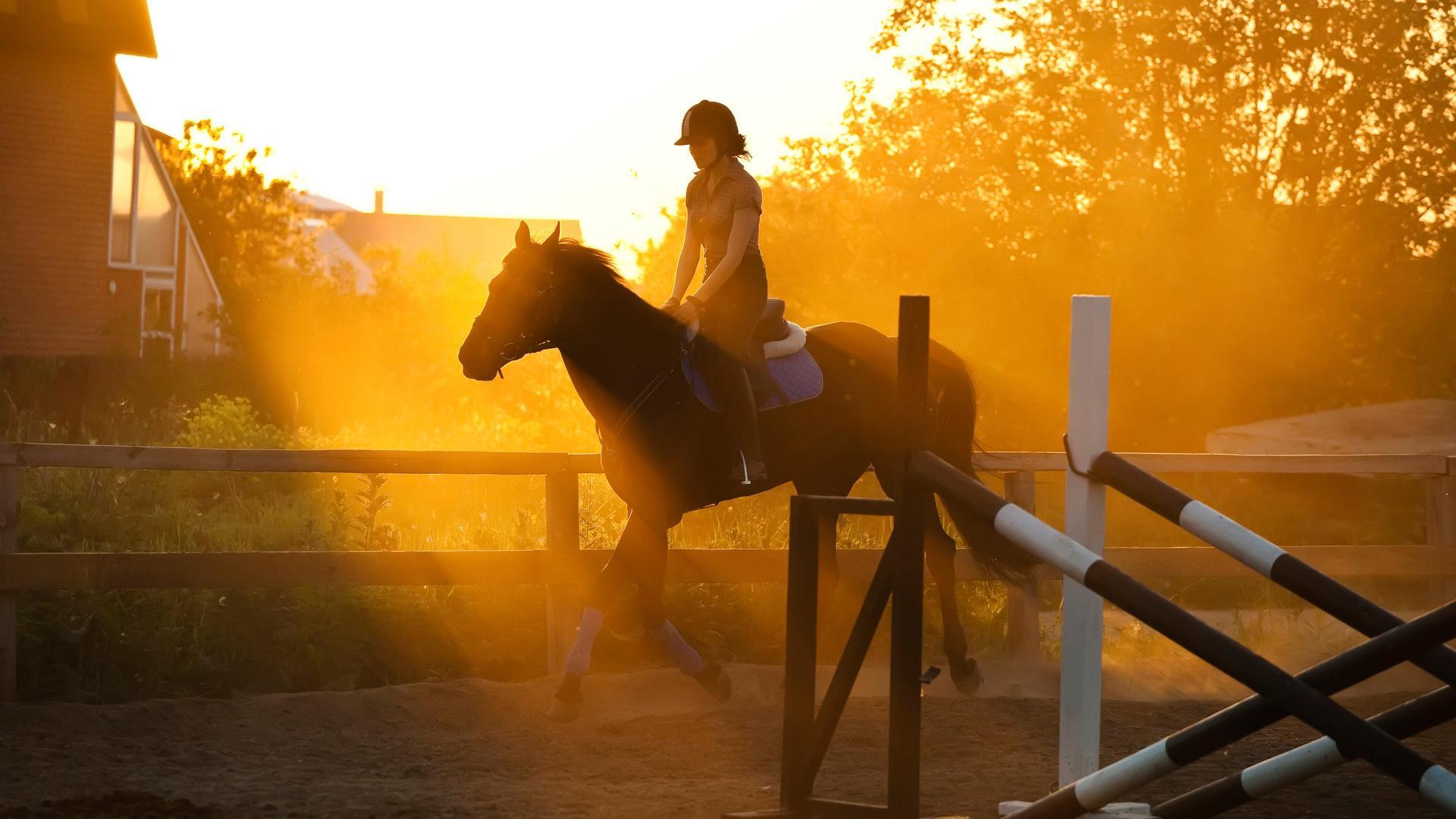 Horseback Riding May Improve Your Child's Intelligence