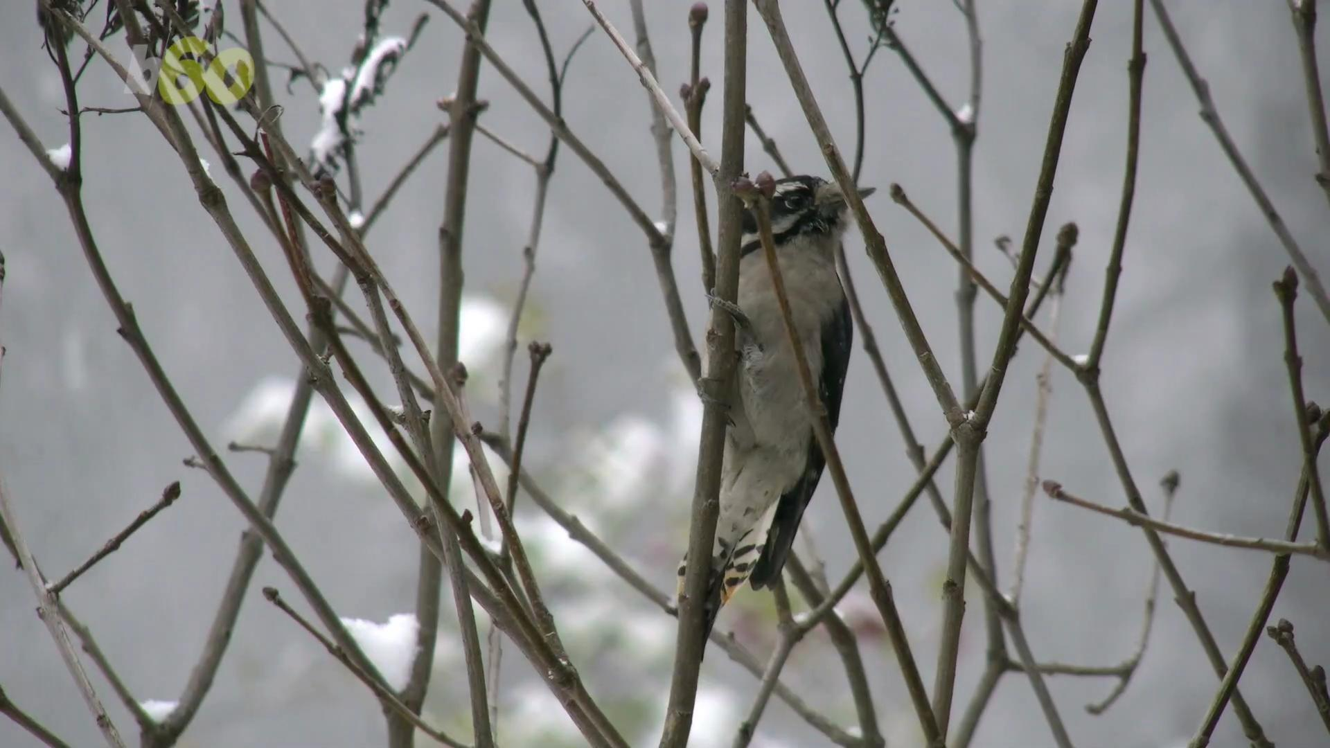 Birds Do This One Thing To Stay Warm