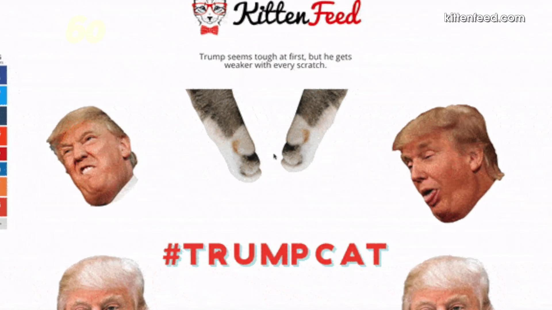 President Trump Shuts Down Teen's Site of Kittens Punching Him