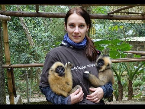 Volunteer Babysits Tiny Gibbons in Vietnam