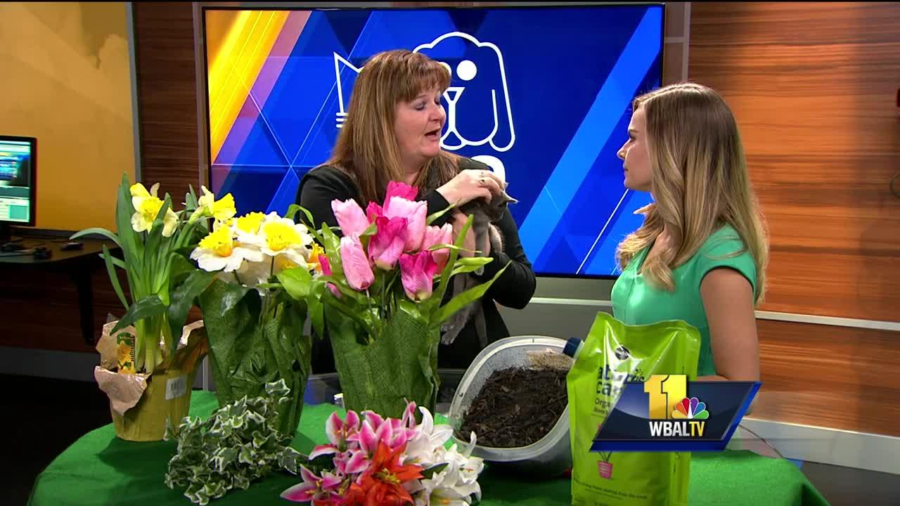 Springtime dangers for your pets