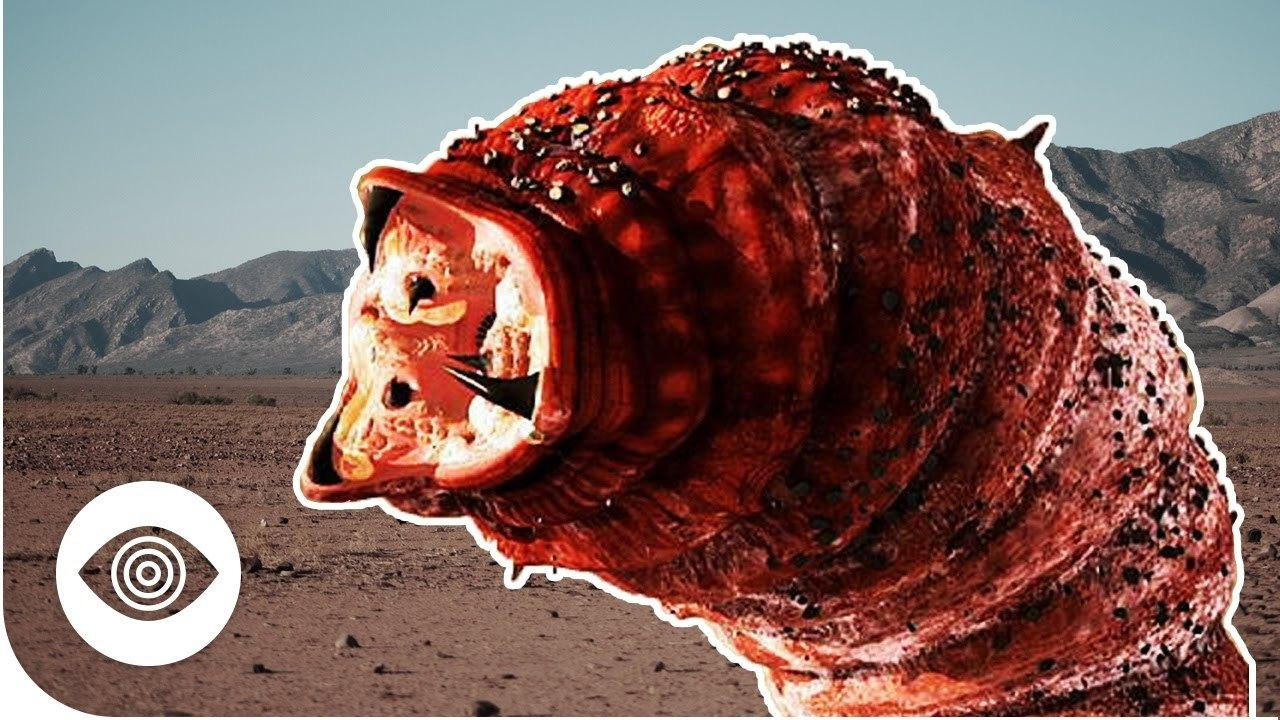 Is The Mongolian Death Worm Real?
