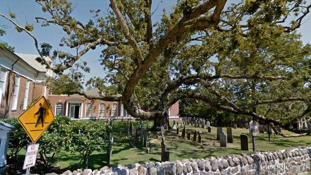Iconic 600-Year-Old Oak Tree In NJ To Be Taken Down