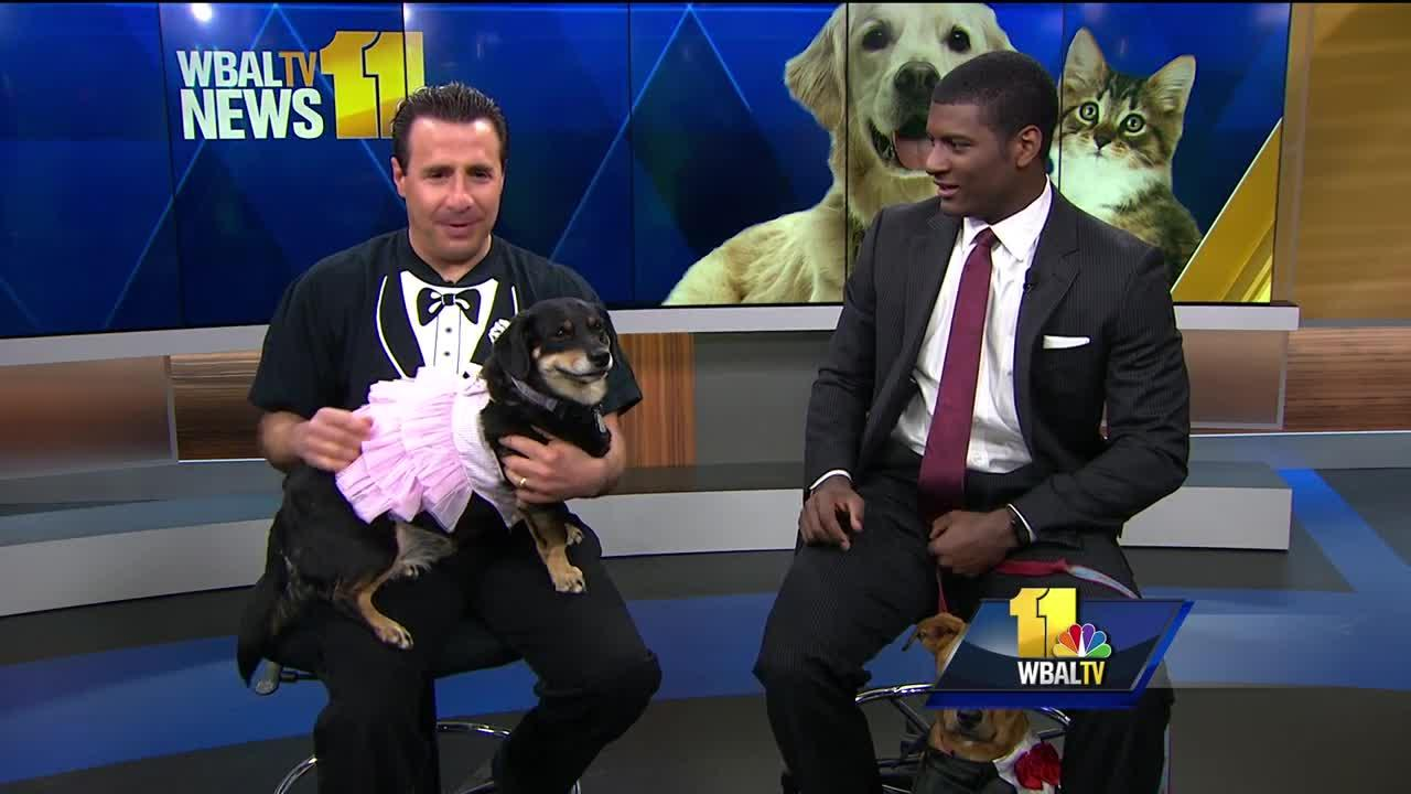 Previewing the Baltimore Humane Society's Black Tie and Tails Fundraiser