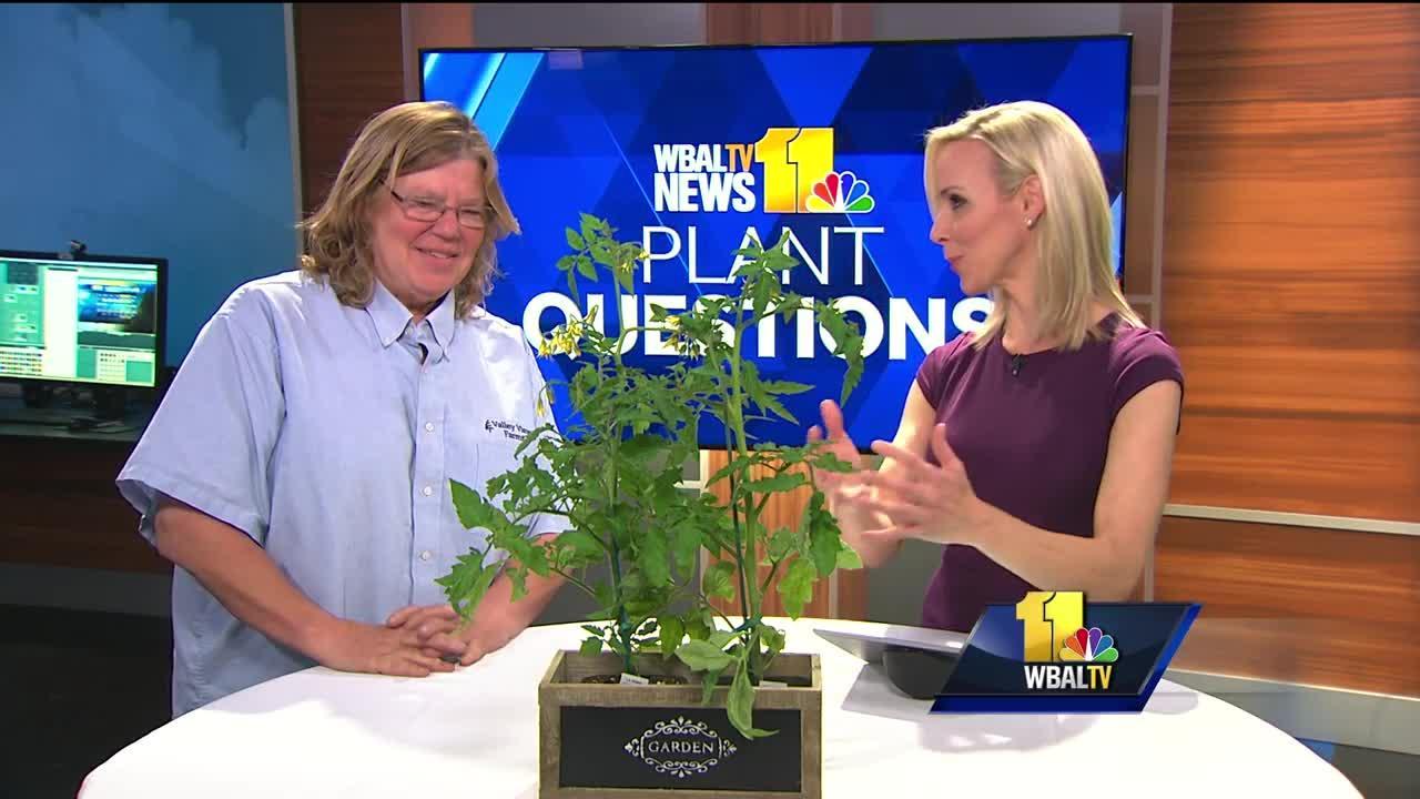 Plant Questions: Growing citrus plants