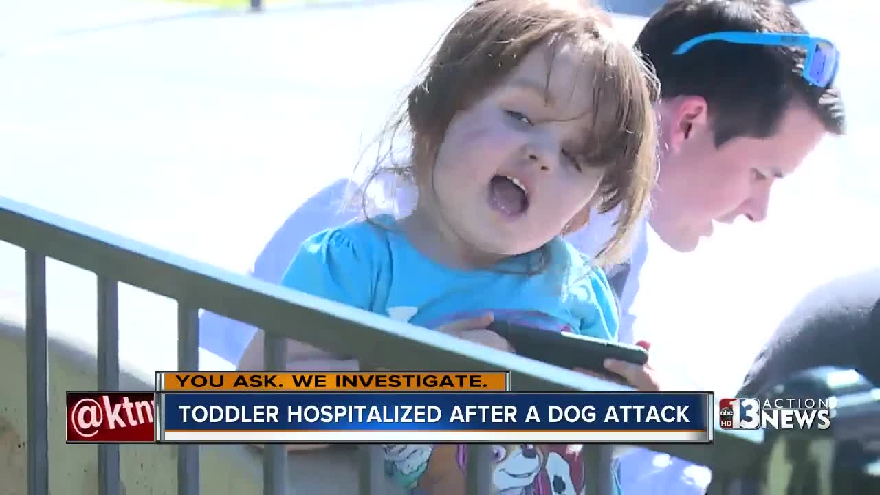 Dog back with Las Vegas owner after 3-year-old attacked