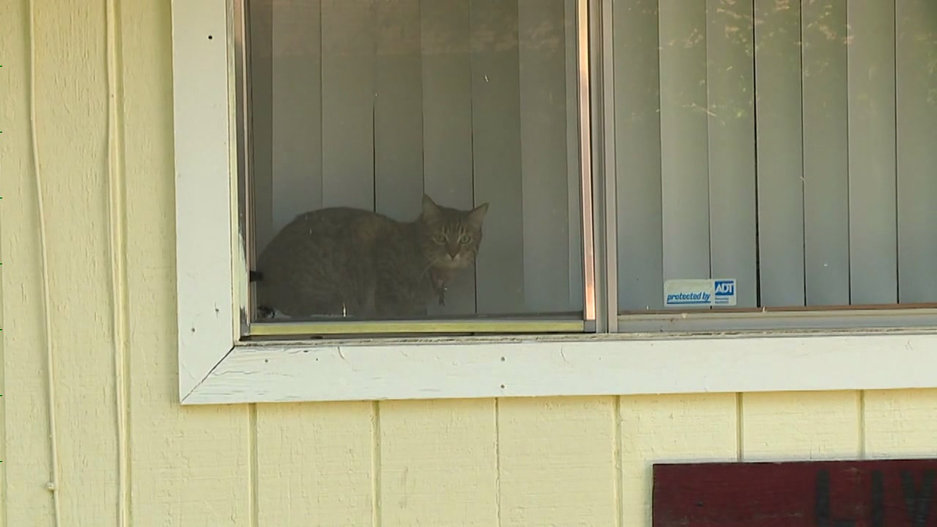 Nuns Accused of Trapping, Relocating Neighbors` Cats