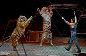 The Ringling Brothers and Barnum & Bailey Circus ends 146-year run