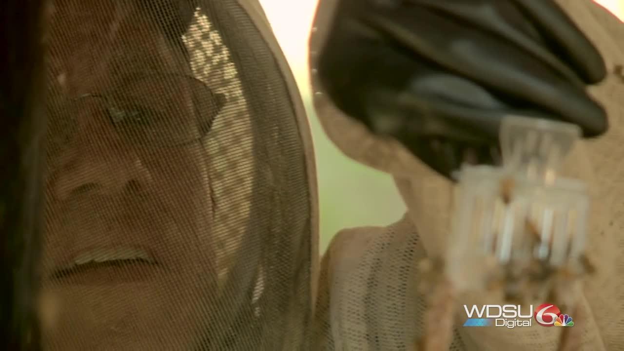 Meet the man 'bee-hind' the honey at Saint Joseph Abbey