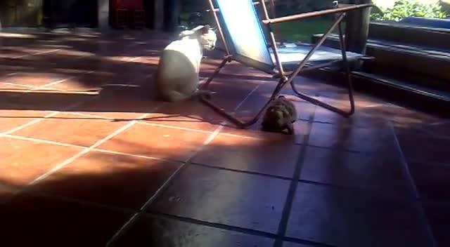 Tortoise Bites A Cat