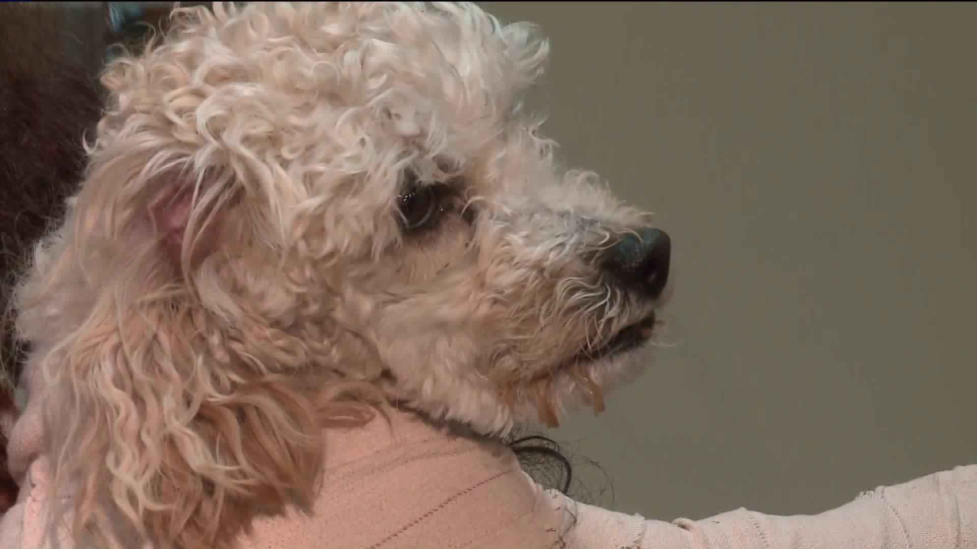 Man Charged With Animal Cruelty for Dropping Toy Poodles from Parking Tower