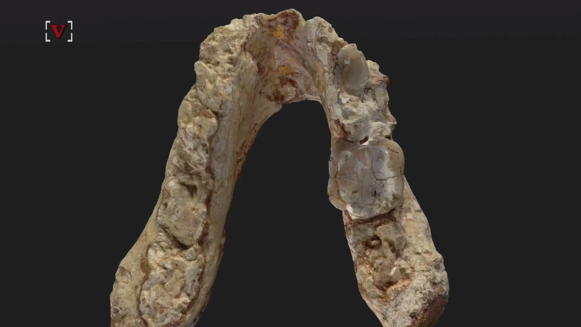 7.2 Million-Year-Old Fossils Challenge The Origin Of Human Lineage
