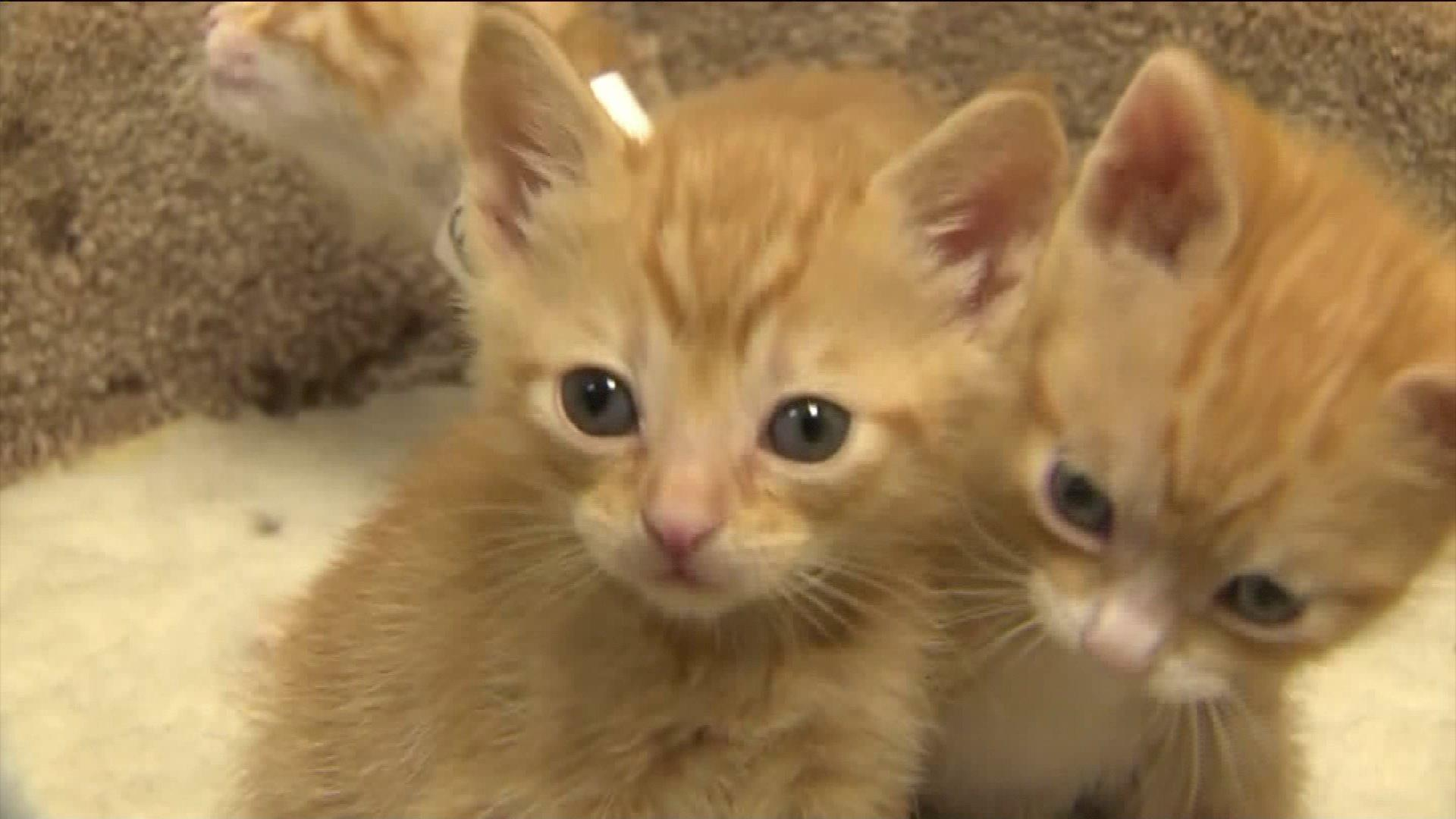 Kittens Found in Plastic Bag Hanging from Tree at California Park