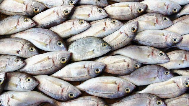 A Plan to Fix Fisheries Has Scientists Feeling Skeptical
