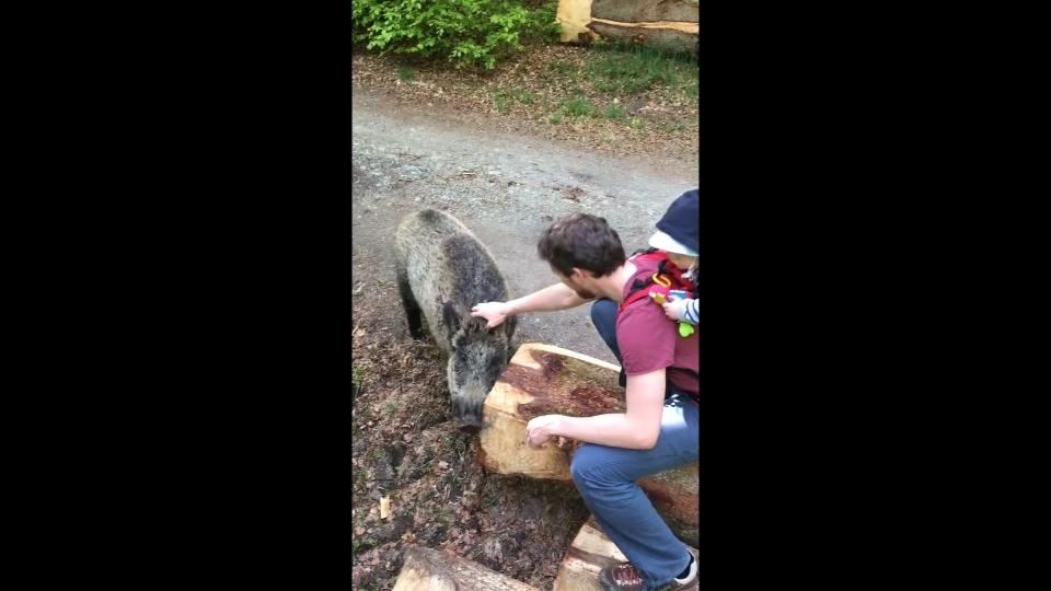 Family in Belgium have chance encounter with friendly wild boar
