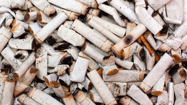 Study: City Birds Use Cigarette Butts To Fight Nest Parasites Like Ticks
