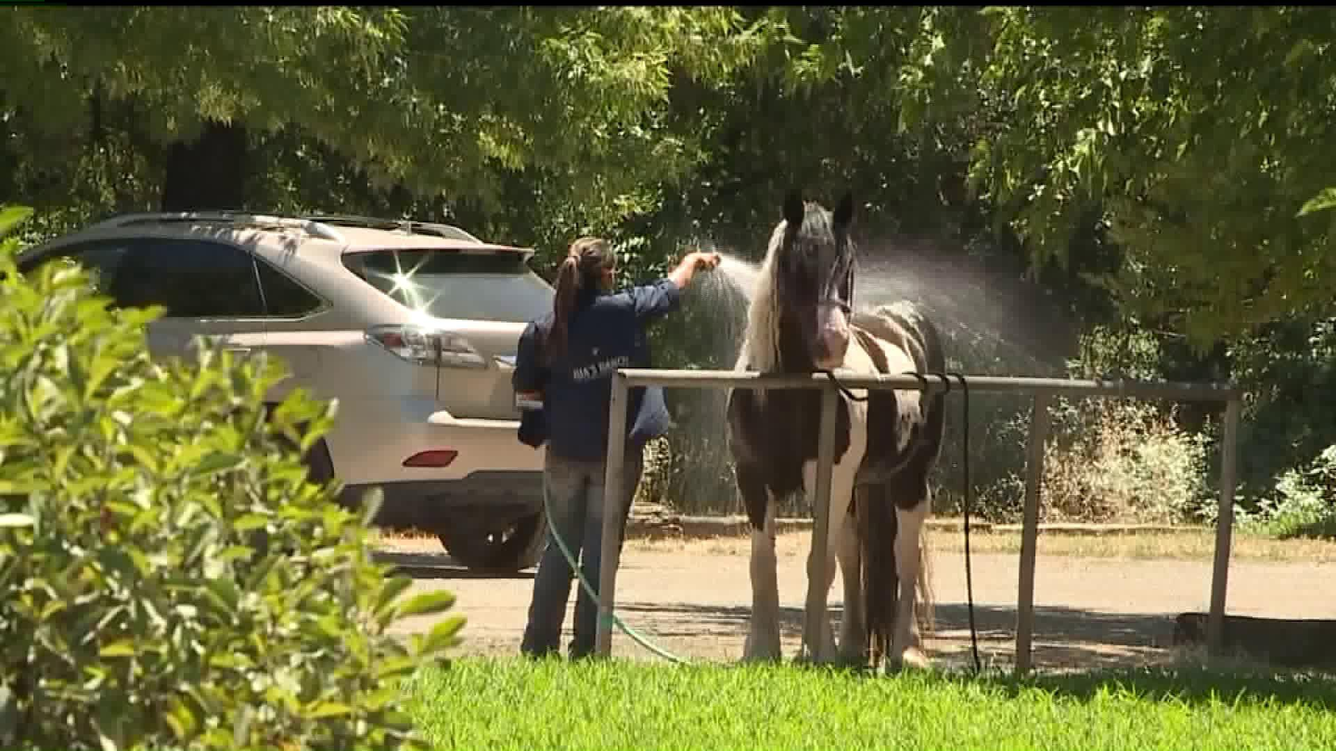 California County Considers Adding 'Horse Parking'