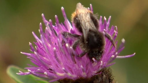 Pesticides are harming bees