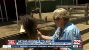 """CALM's beloved donkey """"Sophie"""" dies after 35 years at the zoo"""