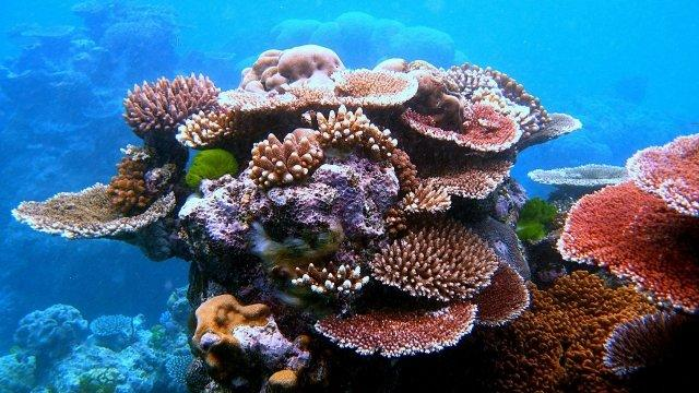 Exposure to Oil Can Affect Young Reef Fish Survival Skills