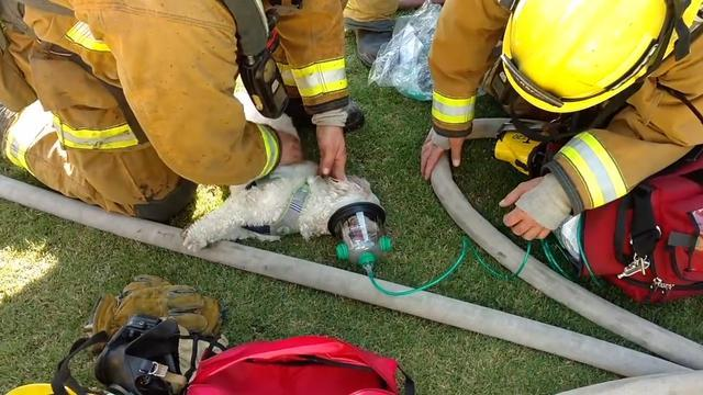 Watch Firefighters Revive Dog After Pulling Him From Burning Home