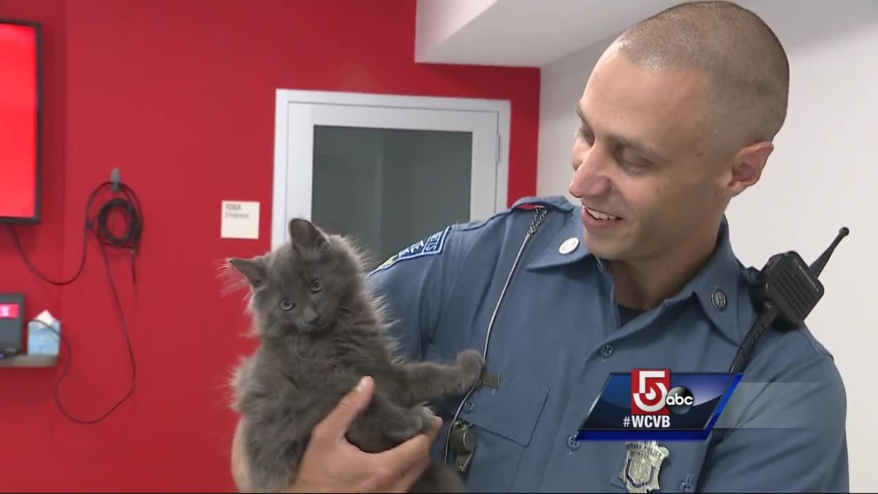Rescue league recognizes trooper who rescued kitten from highway